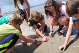 Eighth graders studying ocean life on Tybee Island