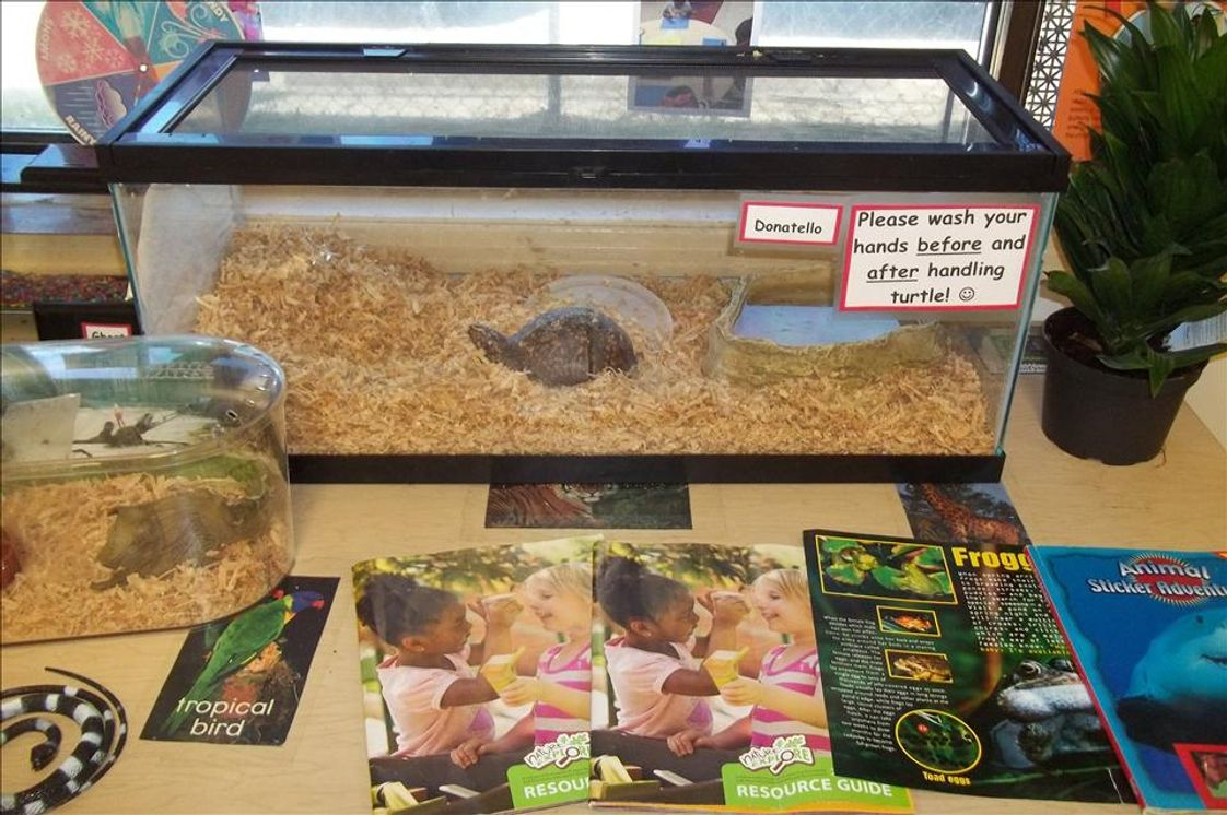 Meridian KinderCare Photo - Wonderful hands-on Science center! Meet Donatello the the Pre-School Class Turtle! Cowabunga!