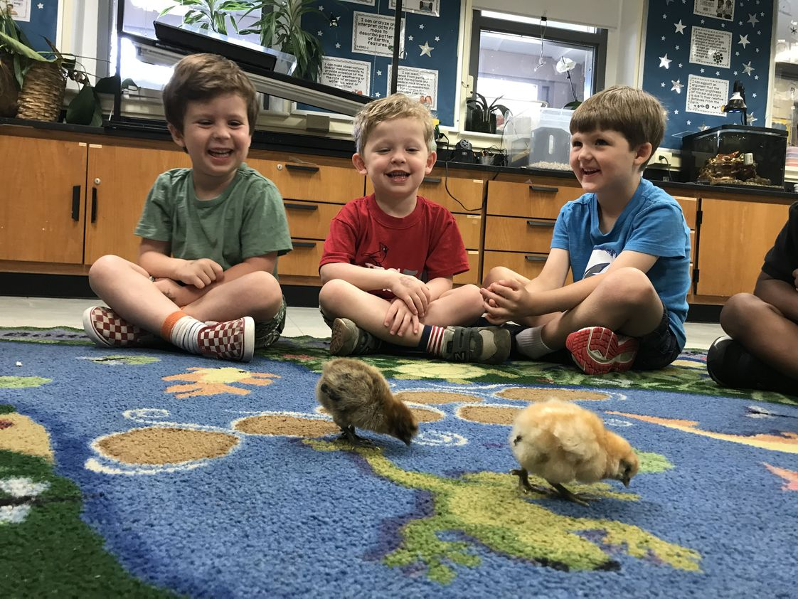 National Presbyterian School Photo - Nursery students study our newly hatched chicks in the NPS science lab.