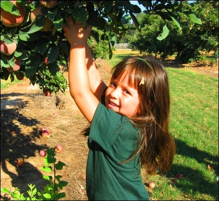 Shannon Forest Christian School Photo - Academic Enrichment Specials are an essential part of Crusader curriculum from PK3-12th grade. Our littlest Crusaders enjoy activities such as Library, Art, Music, Spanish and exciting Field Trips, to name a few. This adventurous member of our PK4 class is reaching for a yummy apple on a recent field trip to a local apple orchard.