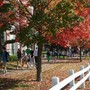 Milton Academy Photo - Milton Academy is only eight miles from Boston's museums, schools and attractions, but it has the benefits of a 130-acre New England campus-with green quads and lots of fall foliage.
