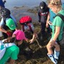 Rohan Woods School Photo #4 - Our Middle School Students, 5th and 6th grades, love their hands-on, week-long, science excursions. In September, 2018, they traveled to the Bay of Fundy and worked with Huntsman Marine Science Centre in St. Andrews, New Brunswick, Canada.