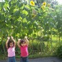 Seed Day Care Center (The) Photo #3 - We planted and grew huge sunflowers