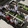 St. Stephen Of Hungary School Photo #6 - In the St. Stephen School rooftop garden, students help grow vegetables and other edible plants. This interactive learning space allows science to come alive as students engage in planting, measuring, caring for, and ultimately harvesting lettuce, broccoli, herbs, and much more.