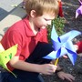 St Ursula School Photo - Planting Pin Wheels of Peace