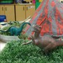 Lakewood KinderCare Photo #7 - Class Project- Dinosaur Unit